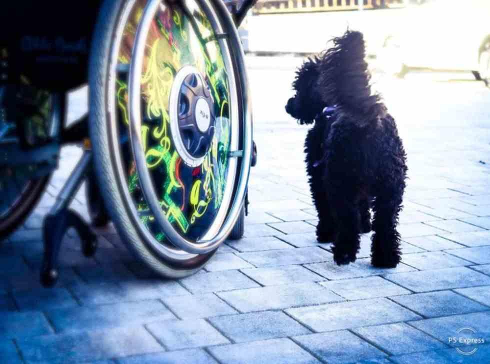flummisdiary-hundeblog-assistenzhund-pudel