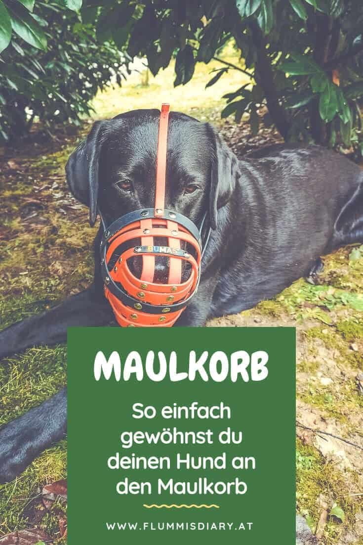 maulkorb-training-hund