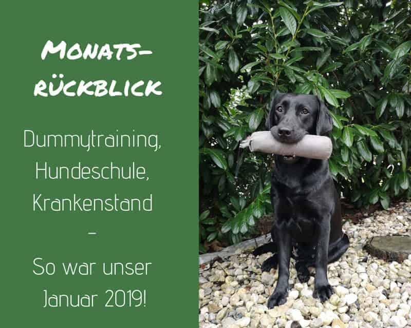 monatsrückblick-januar-2019-hundeblog