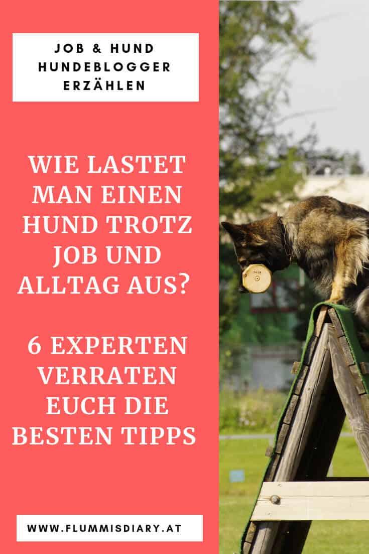 auslastung-hund-sport-hundesport