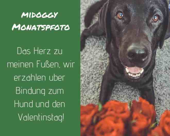 bindung-hund-herz-liebe