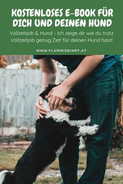 ebook-karriere-hund-job-gratis