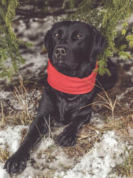 hundeblog-hundediy-schal