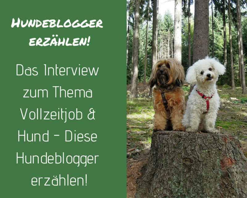 hundeblogger-vollzeitjob-hund-job