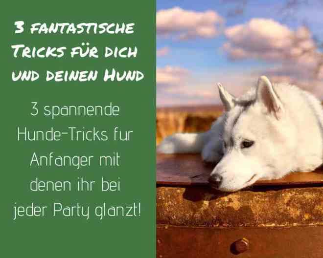 hundetricks-hund-auslastung-labrador-husky-tricksen