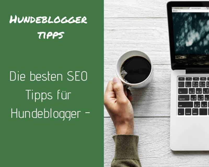 seo-fuer-hunde-blogger