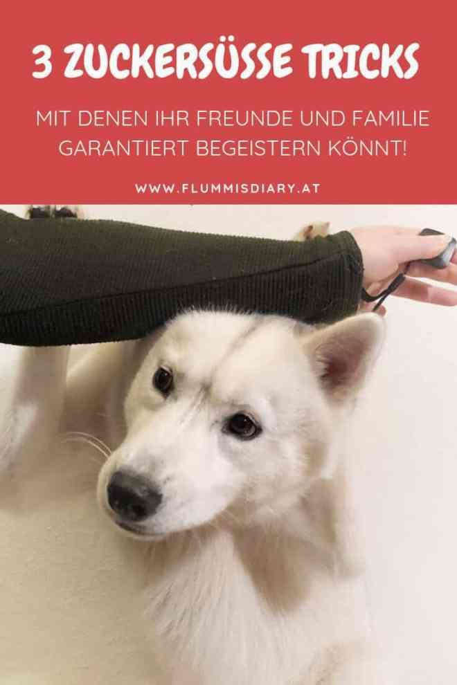tricks-hund-lernen-hundeblog-anleitung