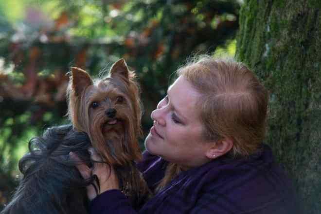 Yorkshire-terrier-blog-vollzeitjob-interview