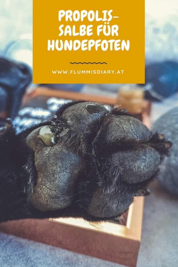 propolis-salbe-fuer-hunde