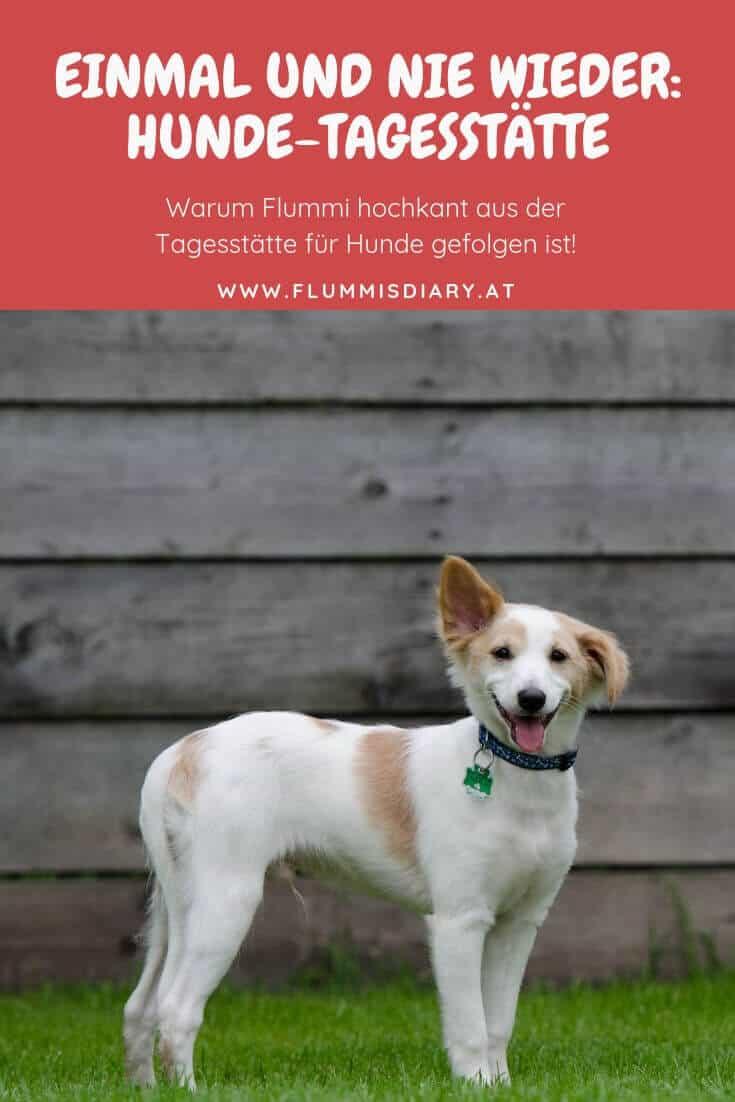 hundetagesstätte-hundepension-betreuung-hund