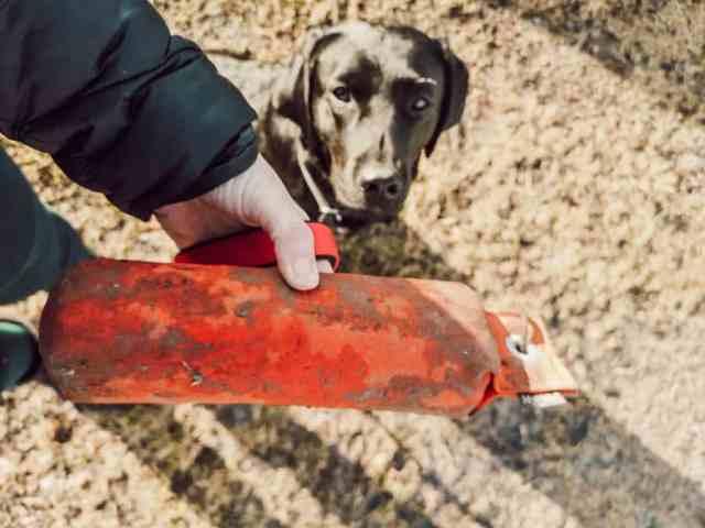 dummy-nach-hause-tragen-uebung-hund
