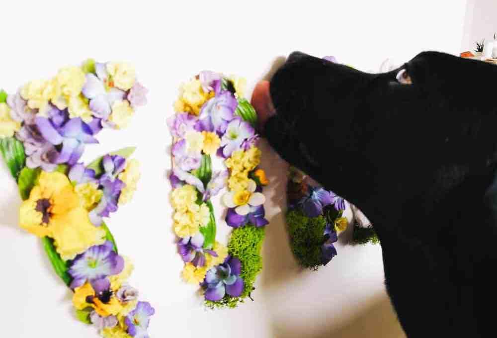 floral-letters-fuer-hunde-blog-diy