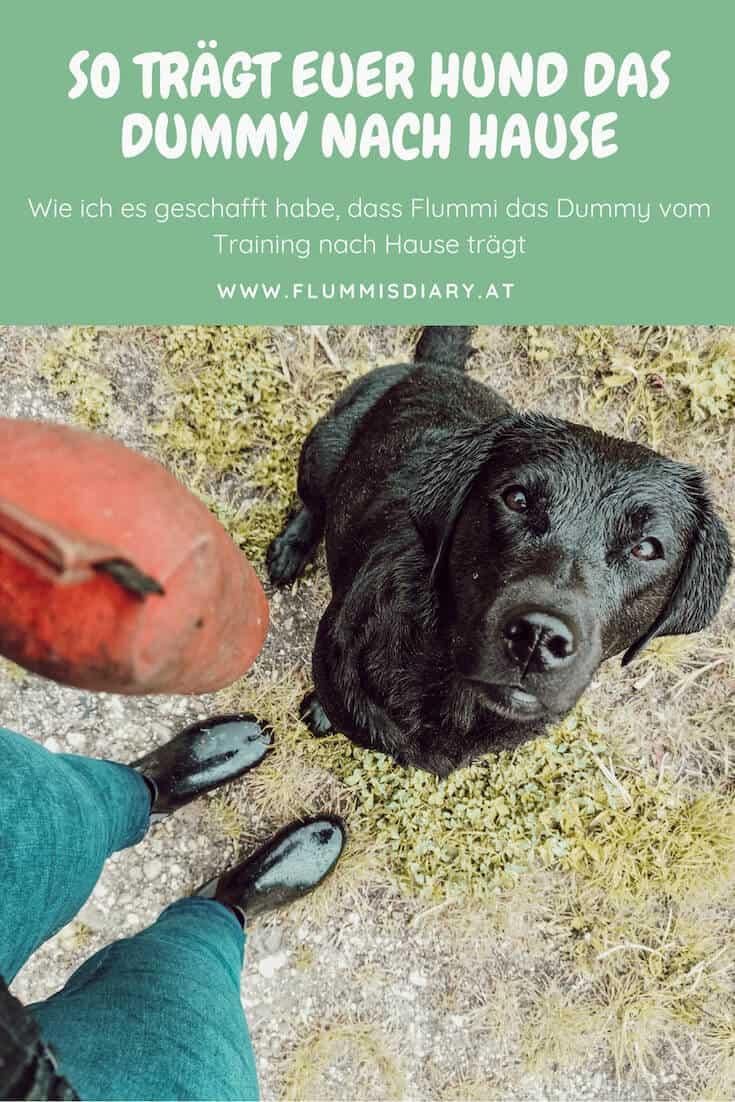 hundetraining-auslastung-dummy-apportel-tragen