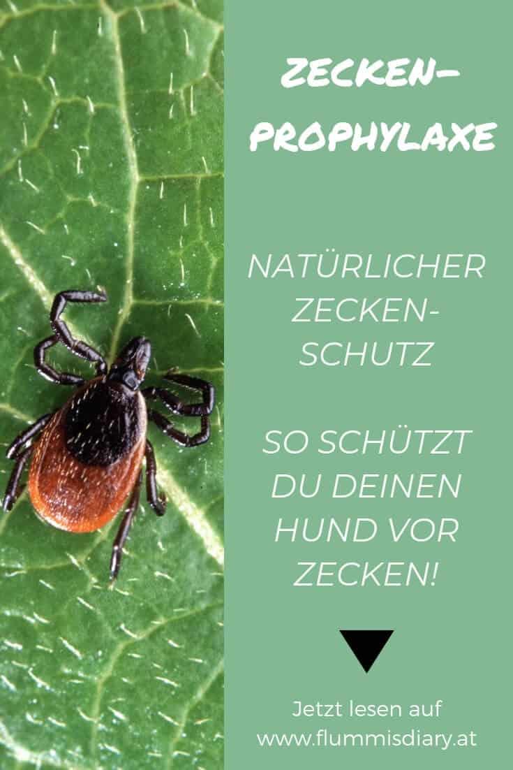 zeckenschutz-hund-tipps