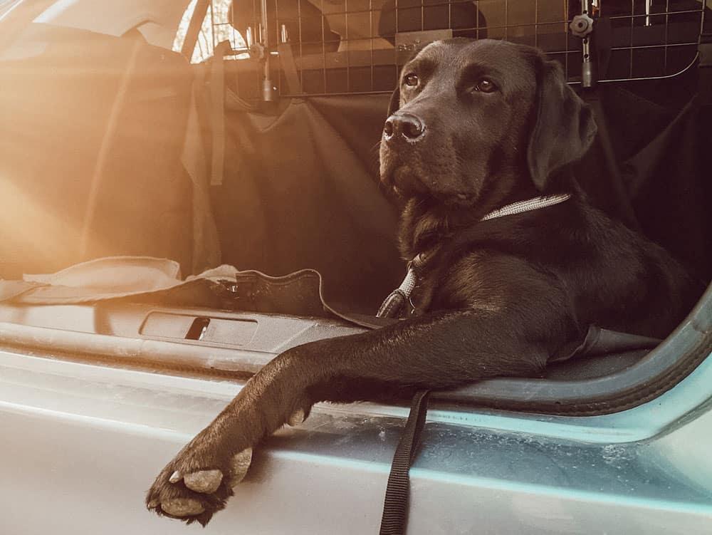 ▷ Autofahren mit Hund: so transportierst du deinen Hund
