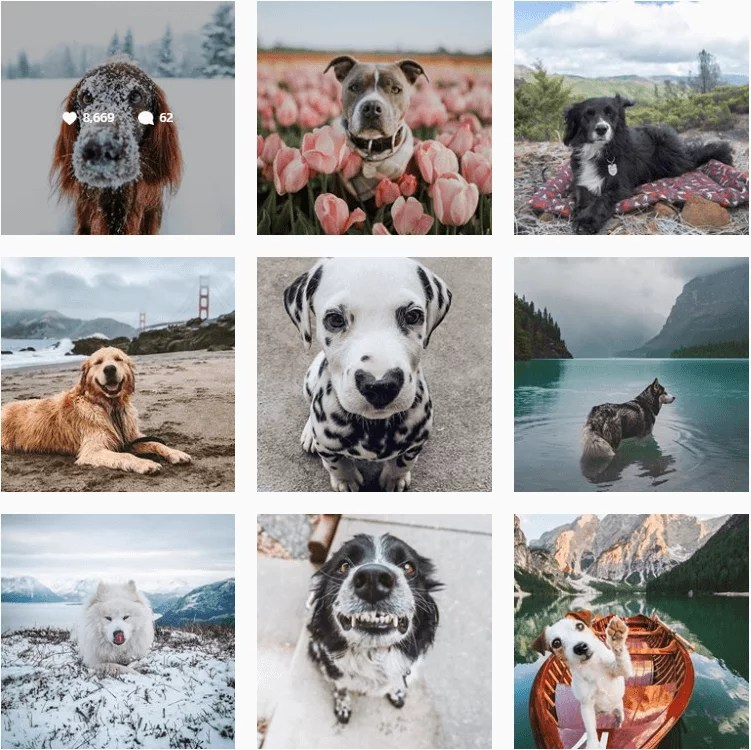 dogsthathike-inspiration-instagram-adventuredogs.png
