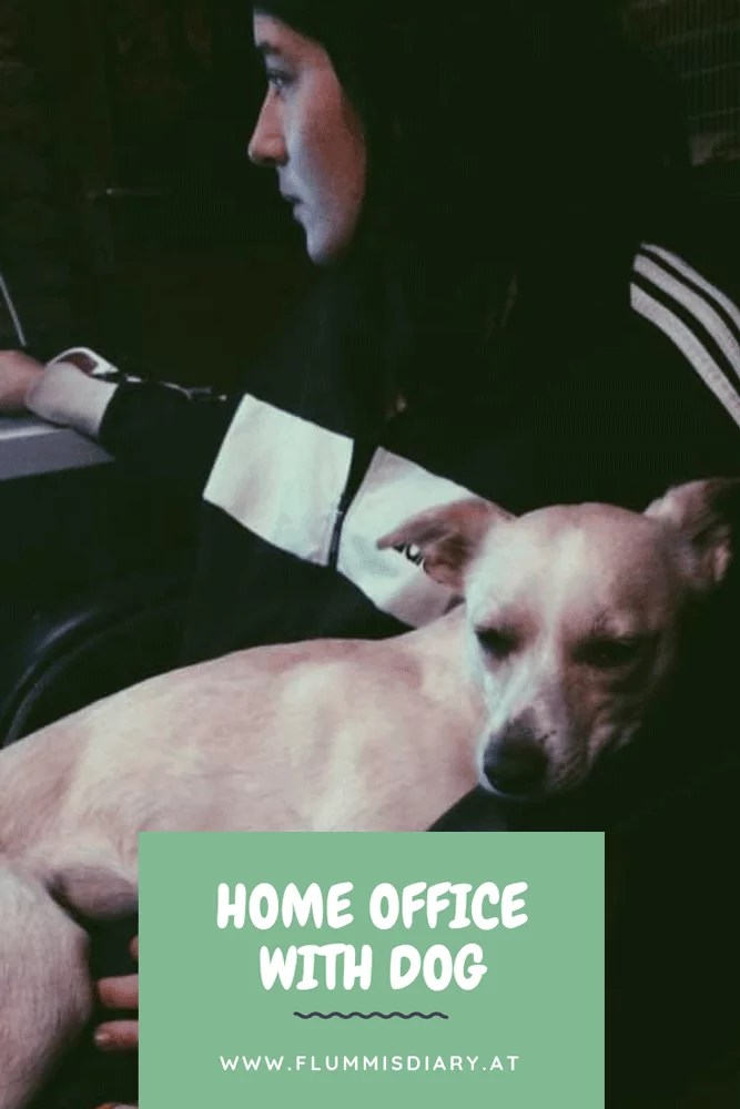 homeoffice-dog-hund-karriere-interview