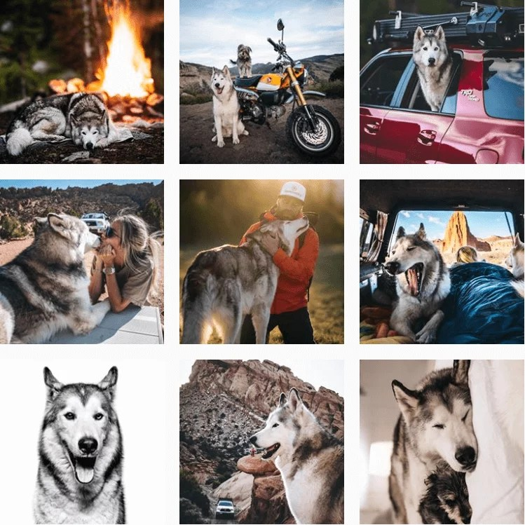 loki-inspiration-instagram-adventuredogs