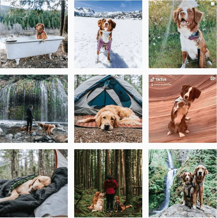 mycaninelife-inspiration-instagram-adventuredogs.png