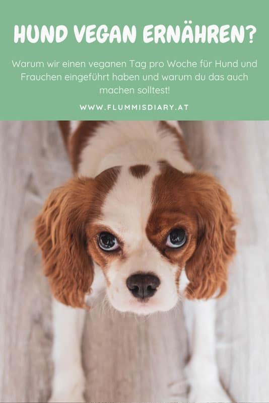 vegan-hund-ernaehrung-blog-tipps