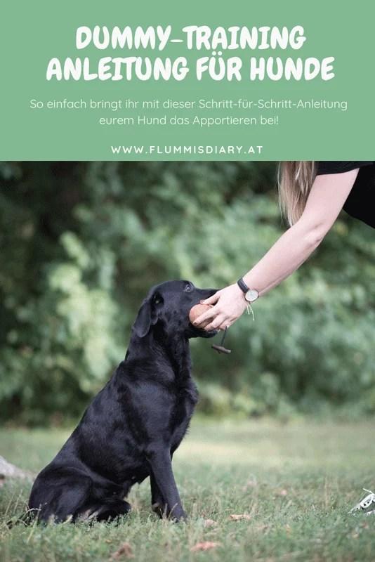 dummy-training-hund-anleitung