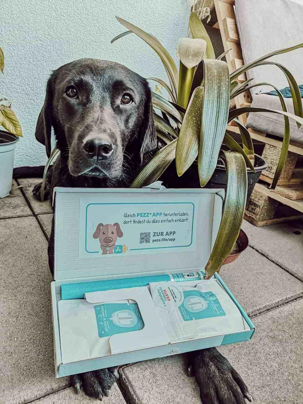 gesundheit-vorsorge-hund-test-dog