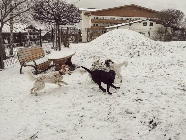 hundeplatz-hotel-magdalena-zillertal-tirol-hunde