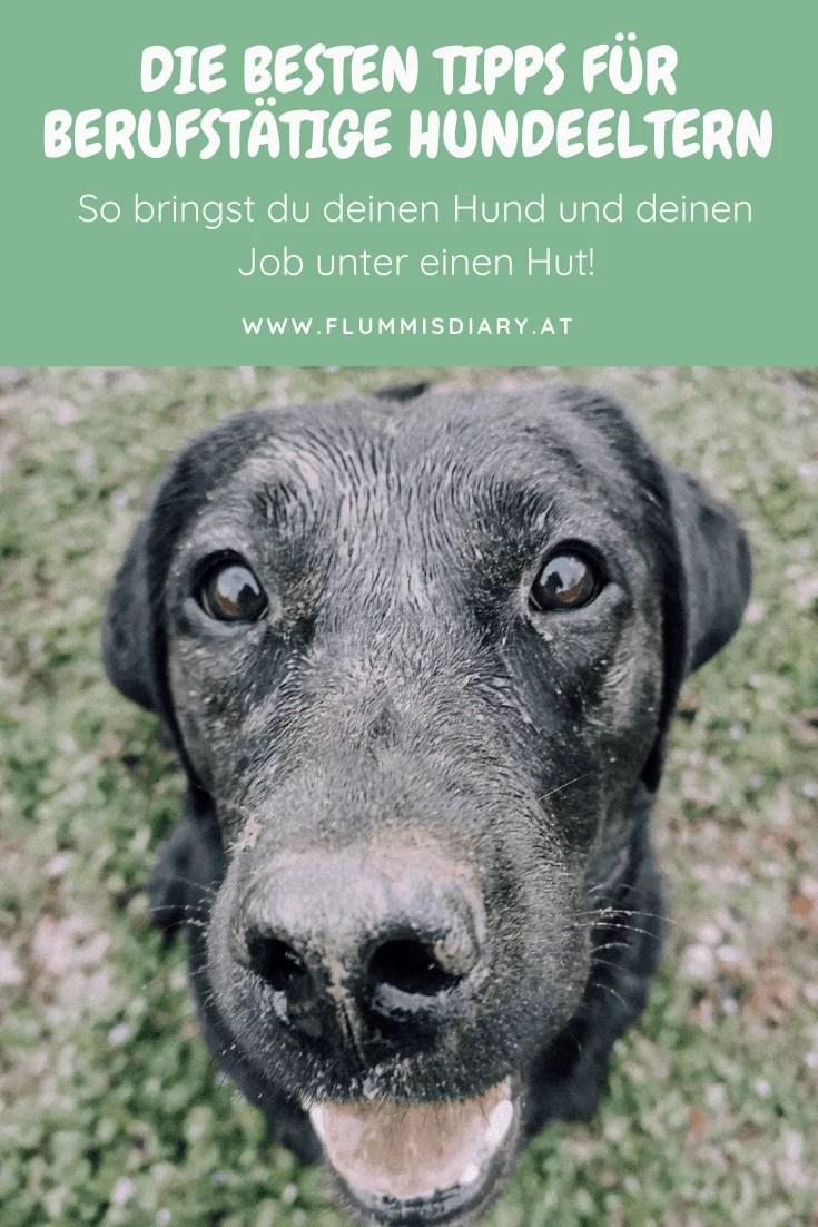 berufstaetig-mit-hund-job-arbeiten-vollzeitjob-hunde-tipps-erfahrungen