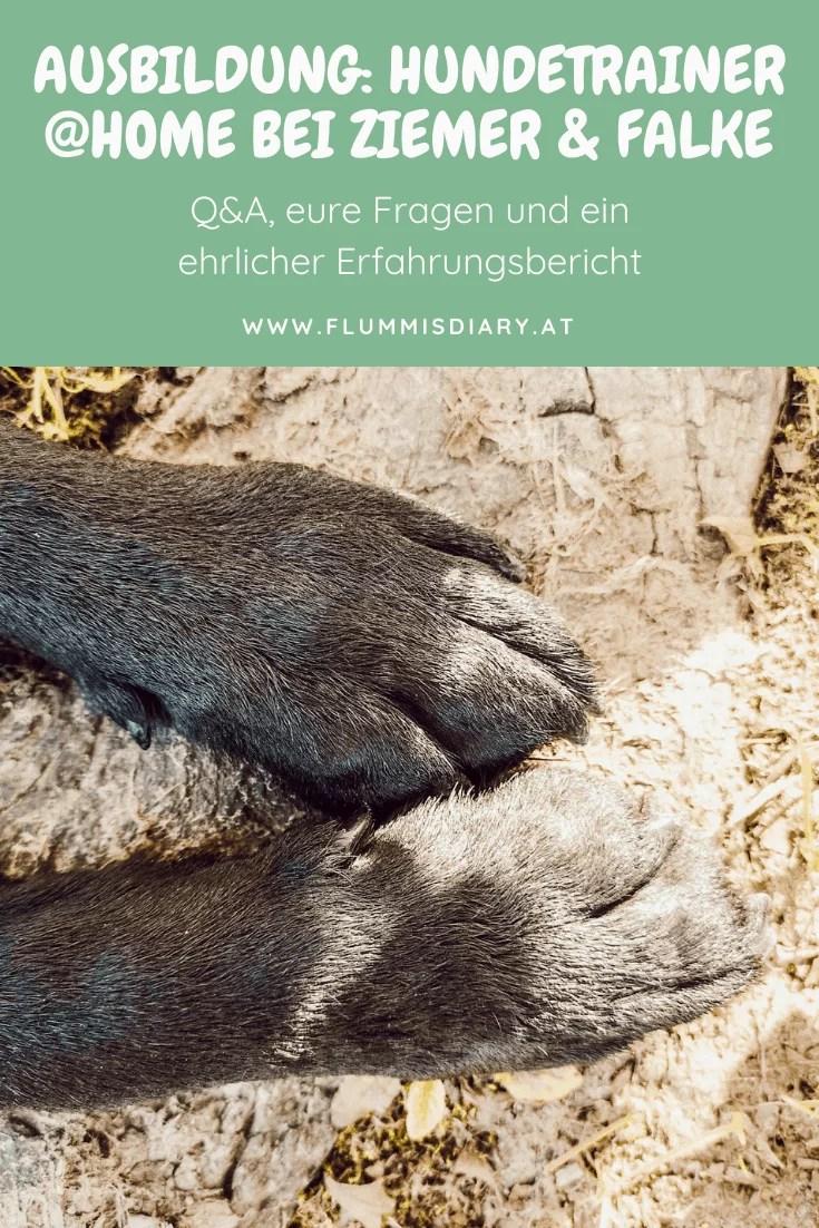 hunde-trainer-ausbildung-oesterreich-lehrgang-fernstudium-hundetrainer