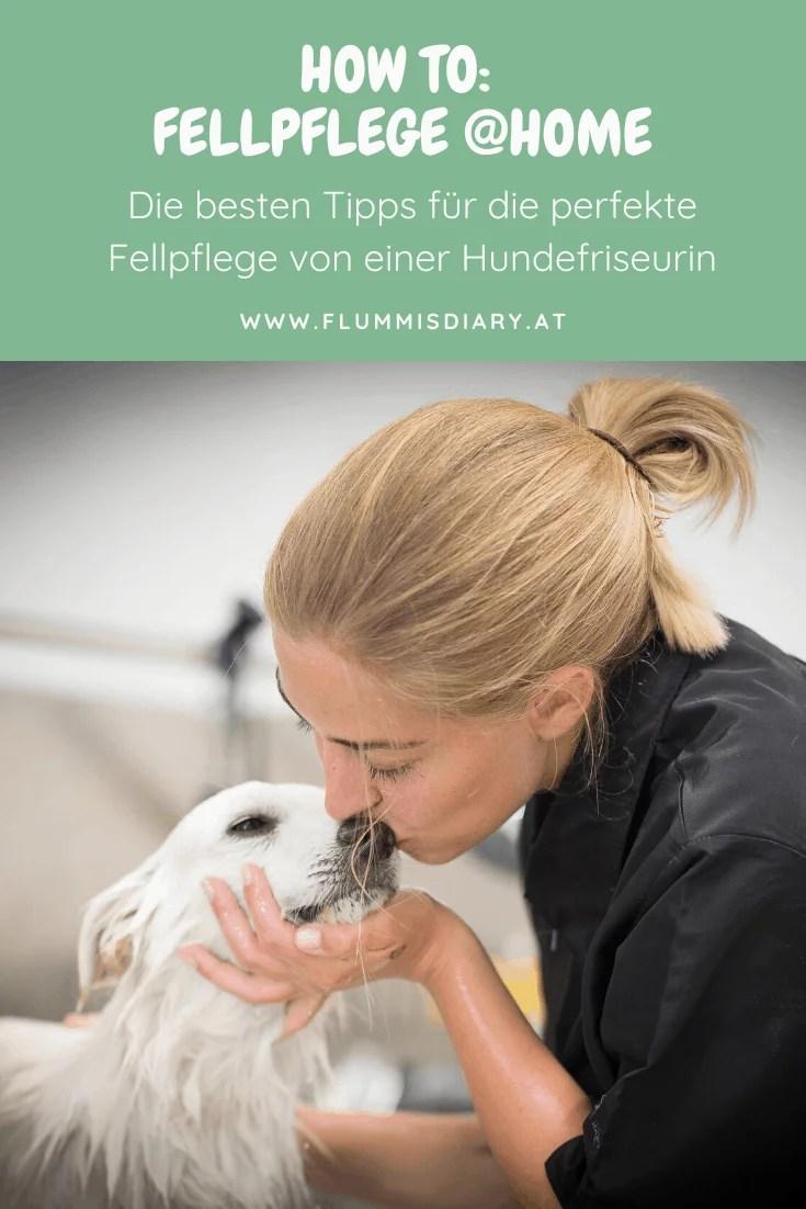 fellpflege-zuhause-tipps-hund