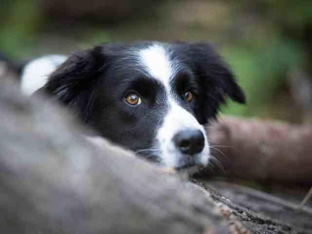 tipps-fuer-das-fotoshooting-mit-hund