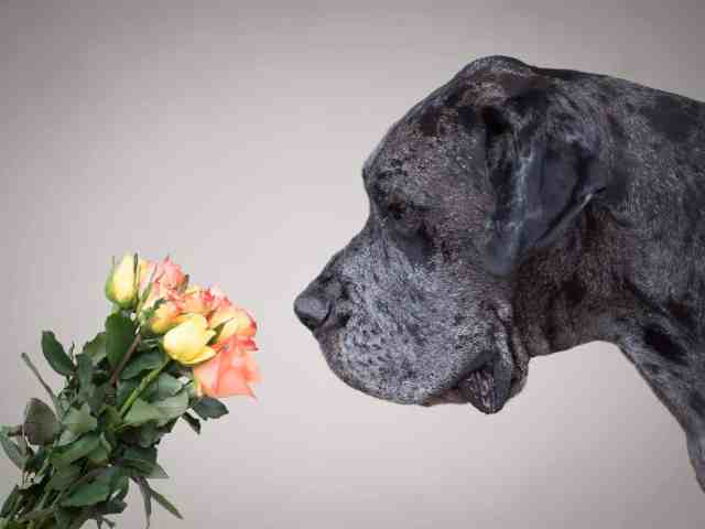 tipps-hundefotoshooting-fotografin-hund-waueffekt