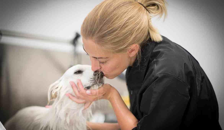 pimpmydog-lisa-hund-fellpflege-hundesalon