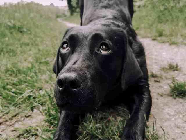 tricksen-mit-hund-hundetricks-kunsstueck-verbeugen-anleitung