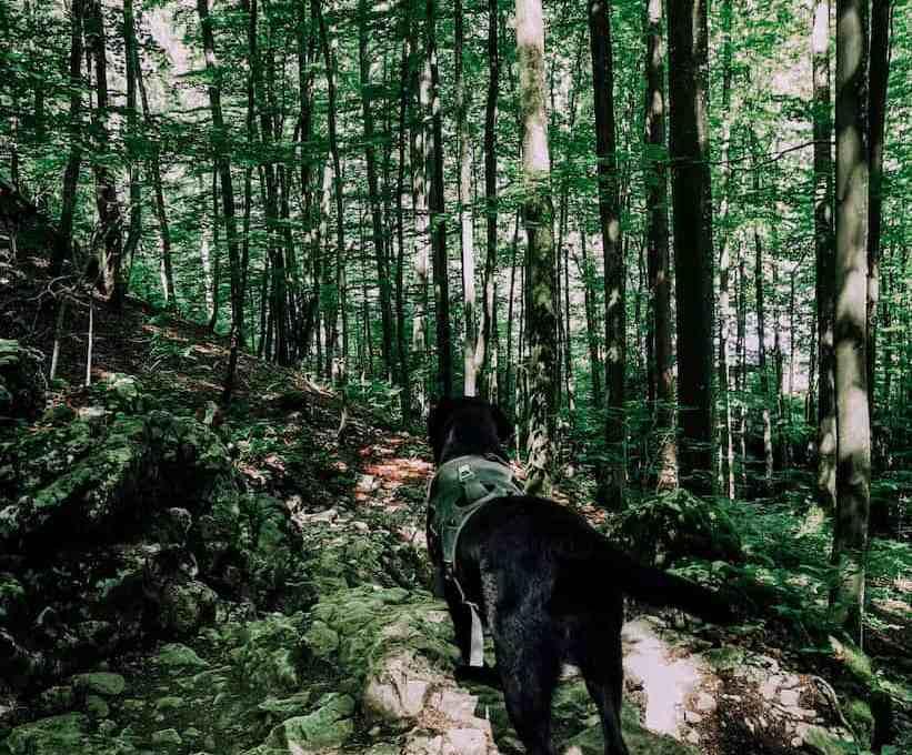 sonnstein-hund-wanderung-mit-hund