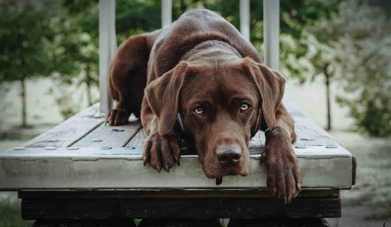 hundepfeife-konditionieren-rueckruf-stopp-signal-anleitung
