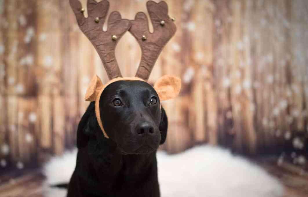 flummis-diary-blog-hund-weihnachten-2020