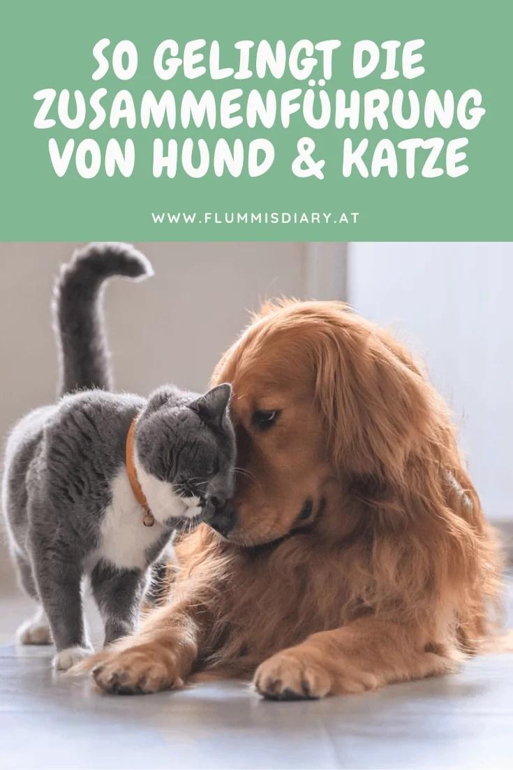 zusammenführung-zusammenleben-hund-katze-erfahrung-tipps