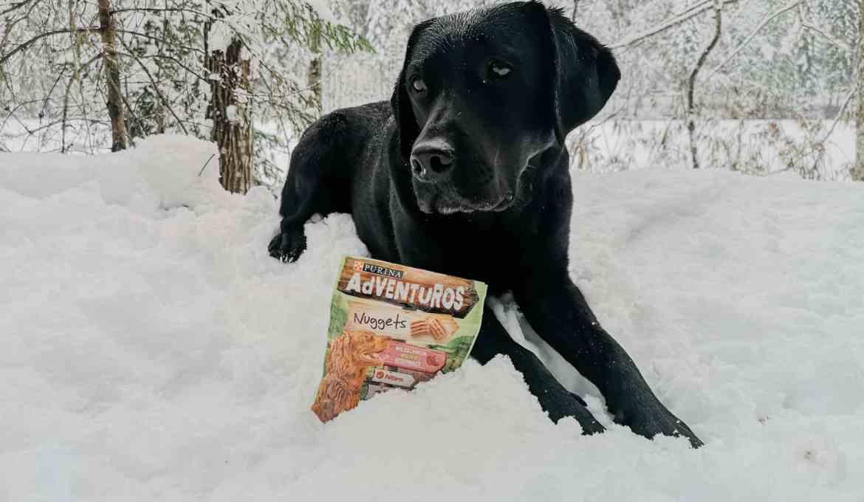 adventuros-ausflug-tipps-inspo-ideen-hund-weihnachten