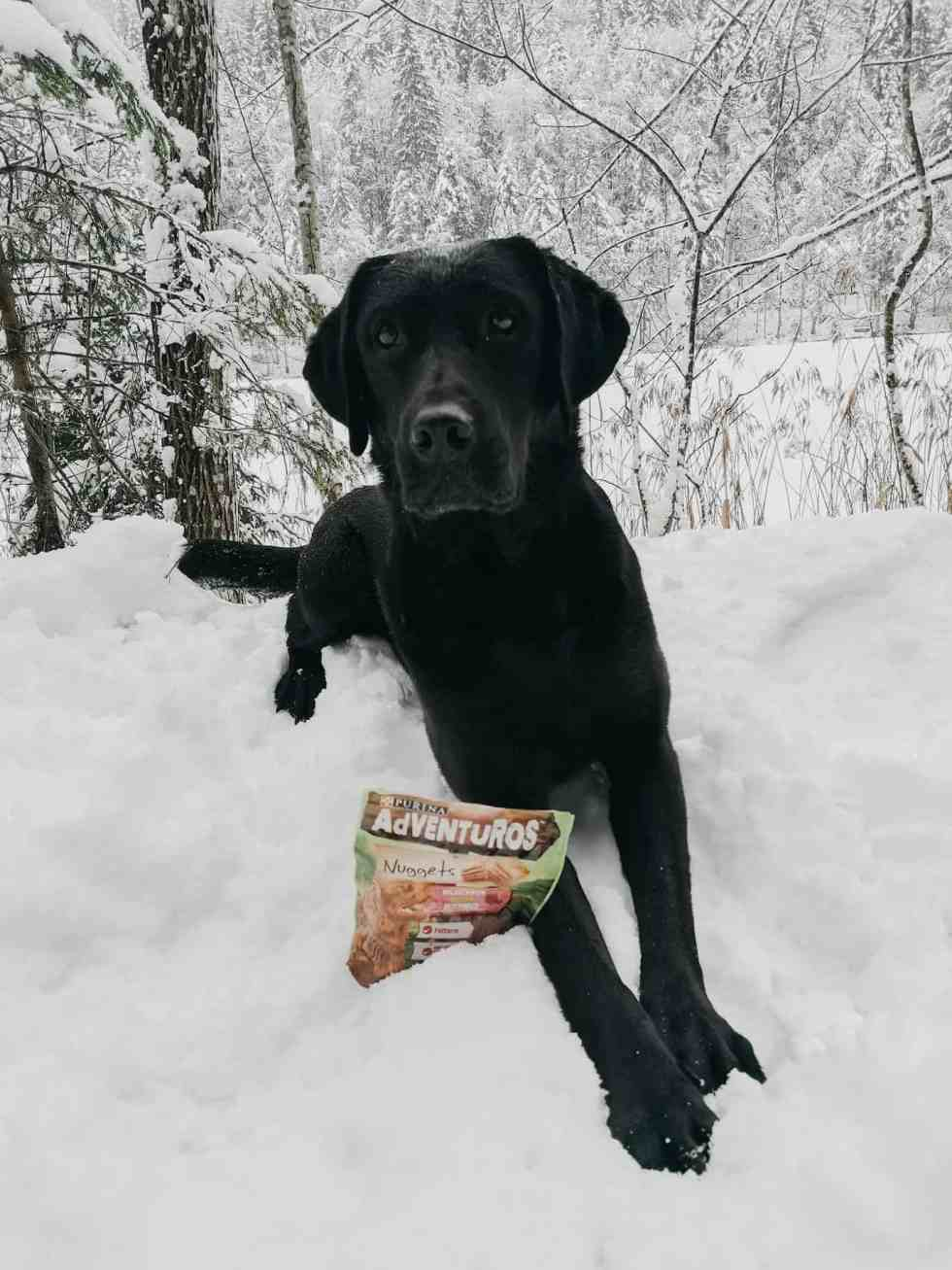 adventuros-ausflugs-ideen-winter-hund-weihnachten