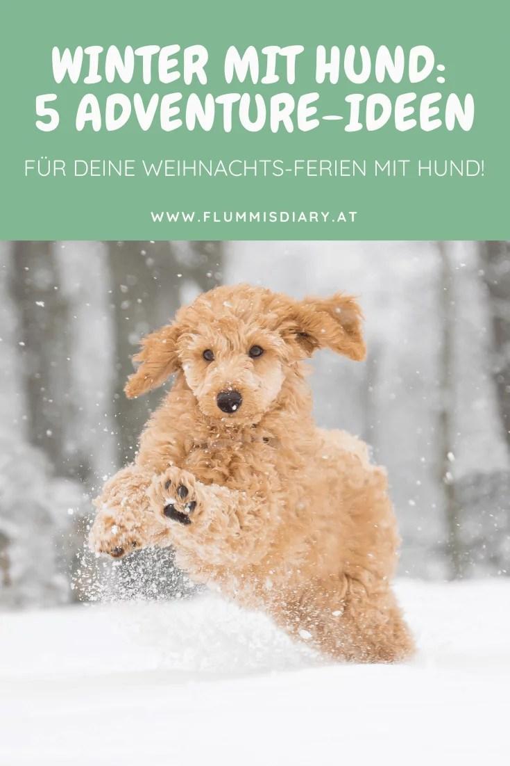 ausflugsideen-inspo-hund-winter-wanderung-weihnachten