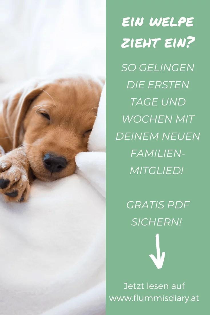 starterkit-fuer-welpen-zieht-ein-welpe-hund
