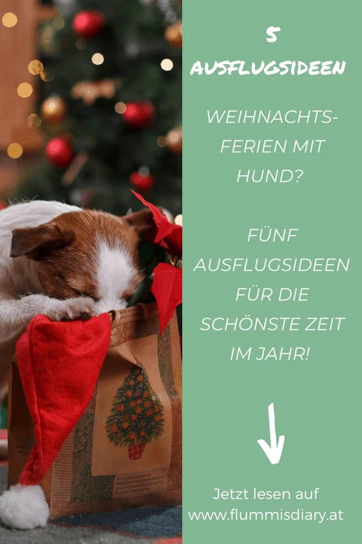 weihnachten-hund-ausflug-ideen-inspiration-hund