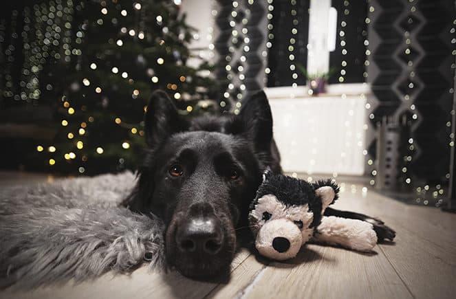 weihnachten-mit-hund-blogparade-663x435