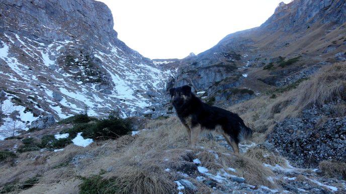 traseu valea cerbului iarna