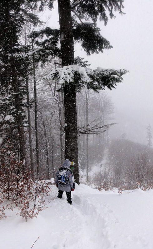 iarna in postavarul