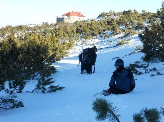 zapada de iarna printre jenepeni