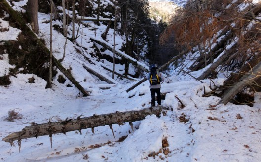 escalada cascada de gheata valea lui stan