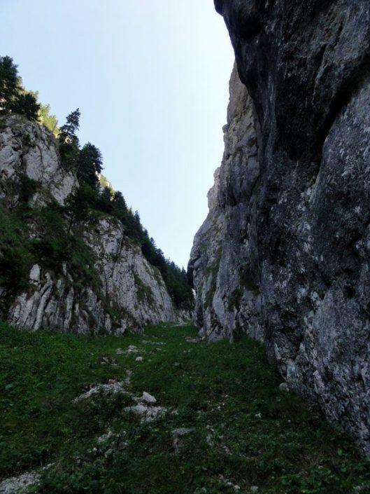 Padina Sindrilariei_Piatra Craiului