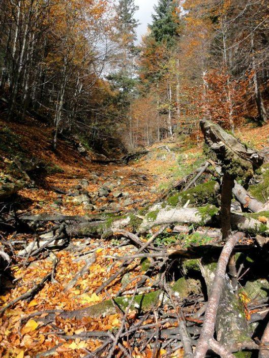 valea grecului varful grecului